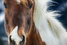 Horses / ♡ / by Maiandra
