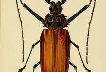 Gravures insectes/plantes