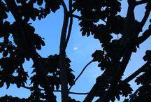 """Guarne caminando / """"Con toda seguridad, el árbol reza a la luz divina.""""  M. Yourcenar."""