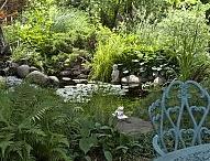 In The Garden / by Jenda Lowery