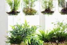 Garden / Tips to enlarge our small garden