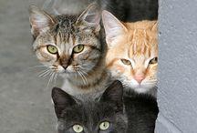 Chats et autres félins