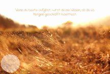 Natur Pur von Talitha Fotografie / Alle Naturaufnahmen von Talitha - Fotografie