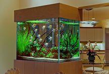 Akvaarioni
