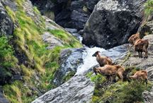 Reasons To Travel.. / Kullu gives you myriads of reasons to travel...