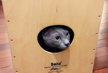 Nice Sela Cajon Pictures / Videos / We collect nice pictures of Sela Cajons in this pinboard.