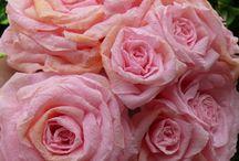 bloemen cadeautjes