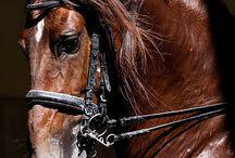 Koně při práci.