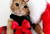 Γατούλες - Cats