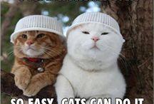 Obligatory Cat Board