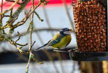 Bird's and nature