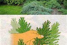 Сад , дача огород