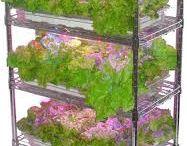 식물 재배기