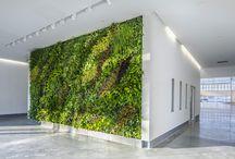green walls inside