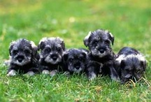 CUTE  Puppies!!!!!  :D / by Melissa Overton