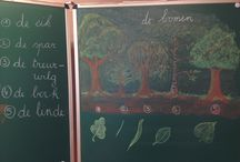 Heemkunde klas 2 bomen