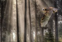 Owls & Forest