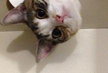 Animali / Gatti