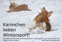 Kaninchen-Infos