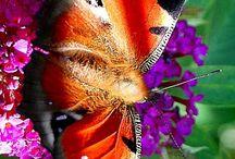 tattoo Schmetterlinge