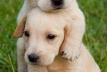 Psi / Na této nástěnce najdete mnoho fotografií na které jsou psi.