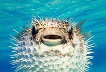Kalat ja korallit