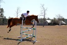 Lovely Show Jumping