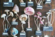 Mushrooms / Mushrooms