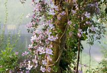 Till trädgården i Wall