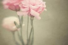Des fleurs.....