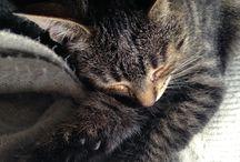 Ella / My cat baby