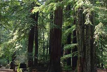 California / I am a California native. My favorite place in the world is in a redwood forest, and I miss the ocean.  I miss California, period. It really does have everything.  / by Laura Jenkins