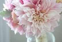 Flores # Flowers