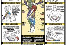 exercise streches