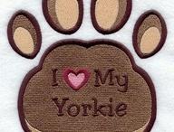 Love Yorkies  <3