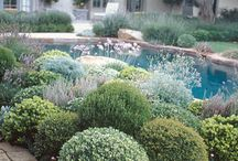 Garden Design: Shapes
