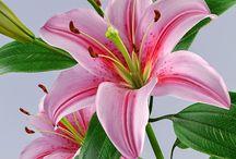Nume floare
