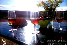 Sherry-Experience / Tour wine, visit to the vineyard, Marco de Jerez, Cádiz, Andalucía, Spain