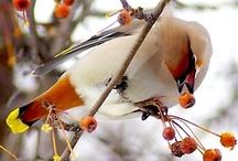 beautiful birds / by Cindy Grayson