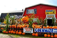 Pumpkin Farms in Snohomish County / Pumpkins, Carn Mazes, Zombie Paintball, Haunts and more in Snohomish County
