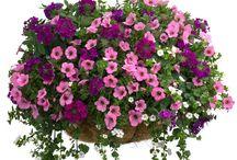 Цветы для украшения двора