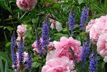 My Secret Garden / by Kay Deja Two