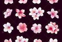 fleurs de cerisiers dessin