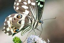 Motýle / Krása motýlov a múr