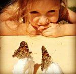 Butterflies / by Aleacia @ Dillydaliart