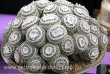 Sukkulente-Mammillaria microthele