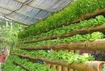 hidroponik bambu