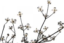 minimalist&flowers