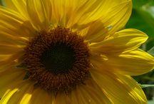 Flores / As cores...a textura...e a beleza das flores Imagens Protegidas por Lei.