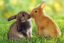 ..Hot Love Animal Style..
